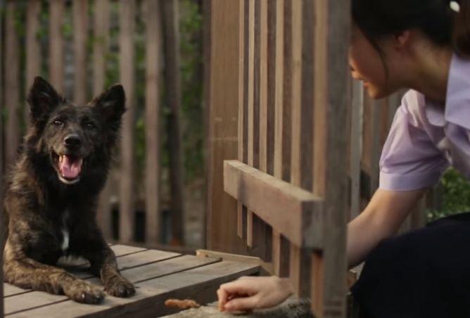 dog_friend_girl_fear