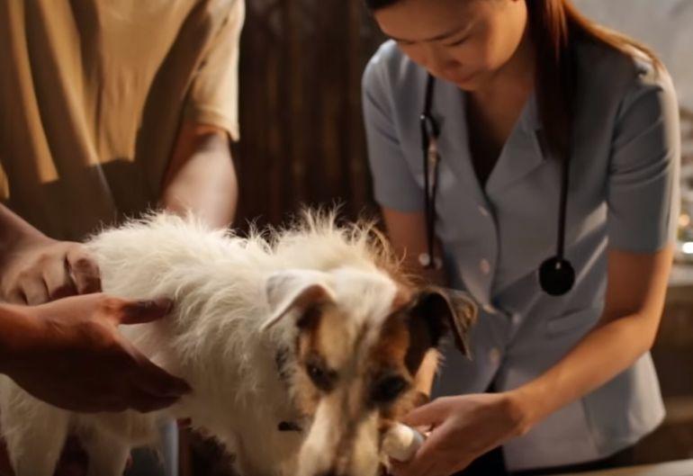 girl_helps_dogs_vet