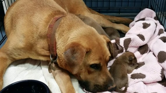 Having watched all of her other puppies die, Nana was very protective of this litter. The staff did everything they could to help mama feel safe and to know that her puppies were safe.
