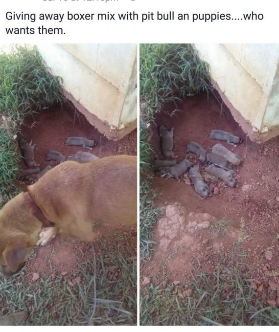 He posted this to Facebook, and the neighbors immediately stepped in to take the dogs. Faithful Friends Animal Sanctuary heard about the situation and contacted Mr. Bones & Co. Rescue for help.