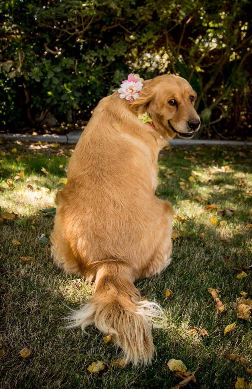 dog-maternity-photo-shoot-chanel-kennedy-sorensen-3