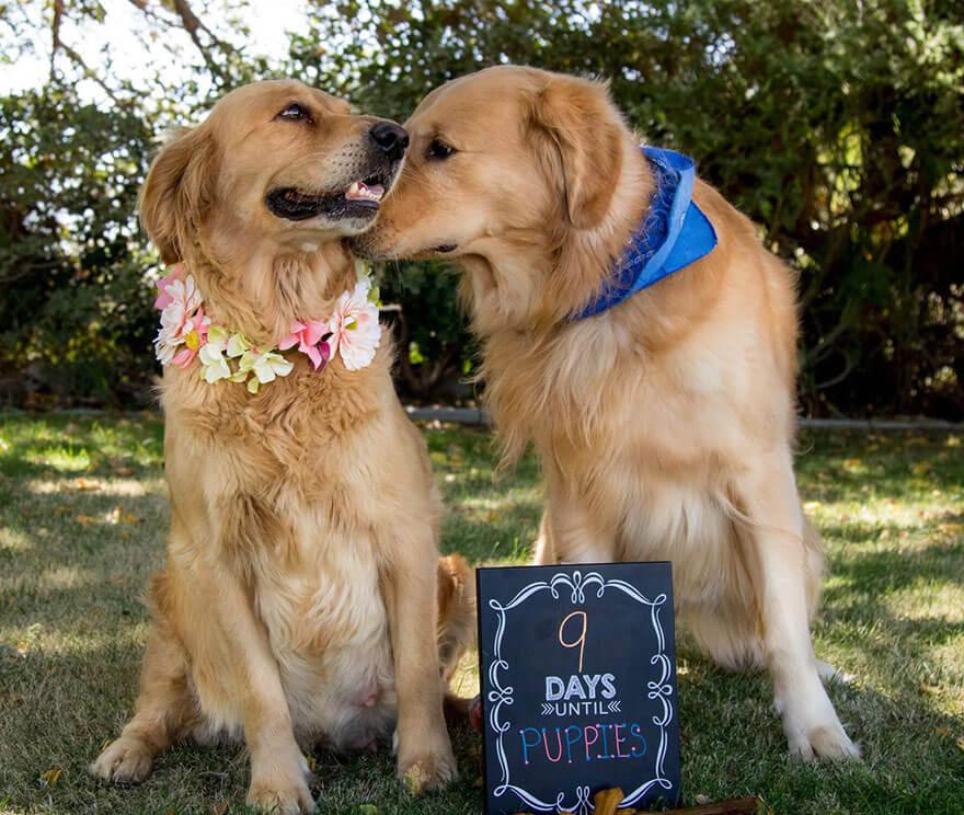 dog-maternity-photo-shoot-chanel-kennedy-sorensen-5
