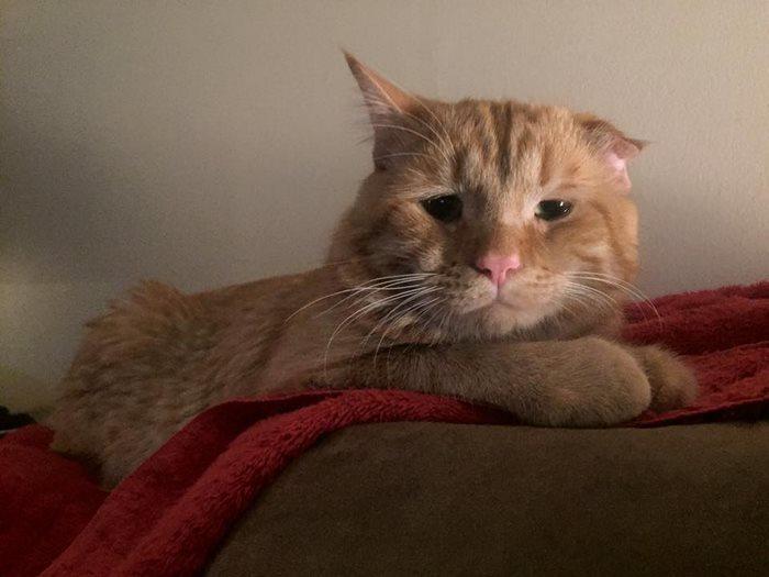 saddest-shelter-cat-benben-transformation-4