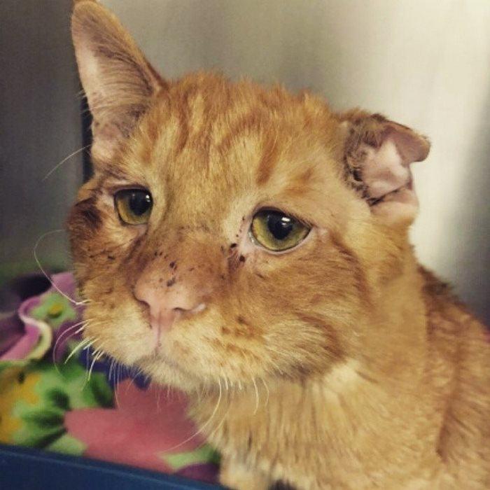 saddest-shelter-cat-benben-transformation-16