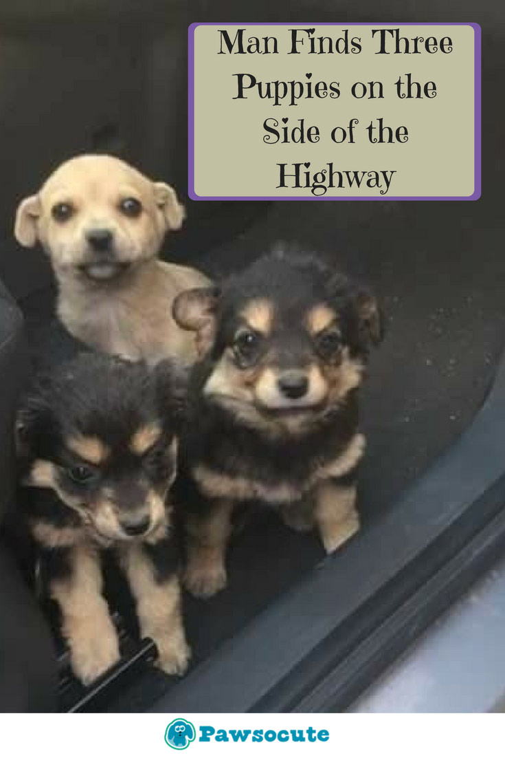"""""""I immediately braked and stopped the car, and started going backward,"""" When Andrei Matei was driving from his girlfriend's home, he noticed something on the highway and he never thought it would be these little cute puppies on the road. See what he did next!"""