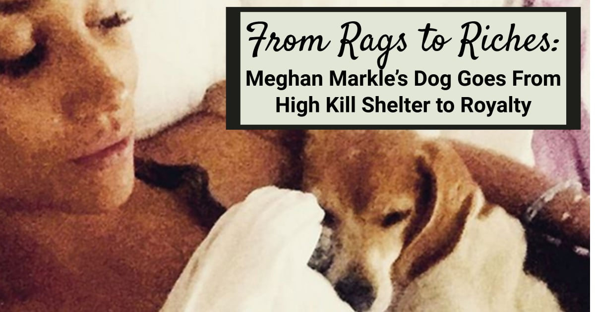 Rags Dog Rescue