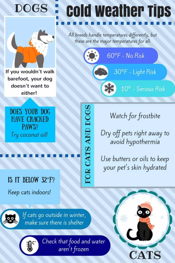 Cold Weather Pet Tips To Keep Your Dogs