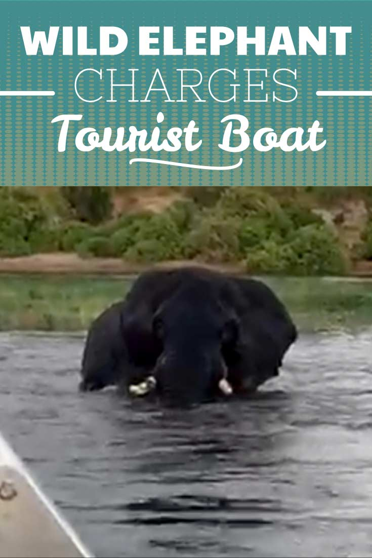 Wild animals can be unpredictable and this elephant is no exception. When tourists on a riverboat came into close encounter with this wild elephant, no one expected this to happen!
