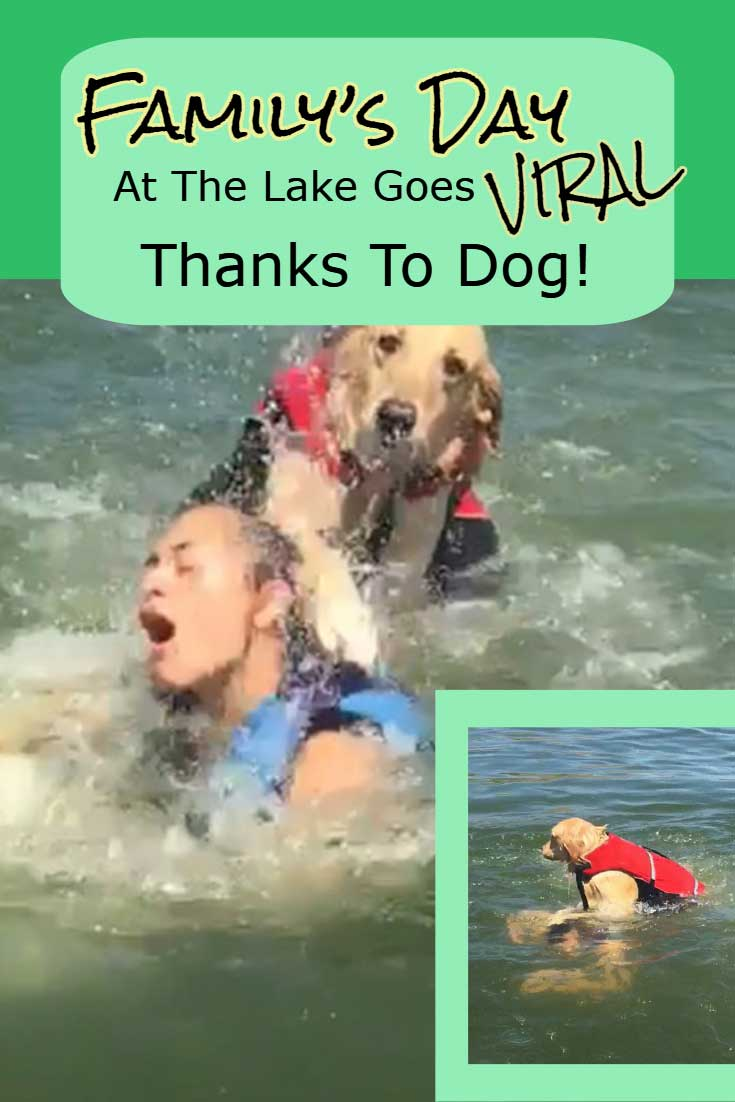 This dog and his human had a plan for a fun day swimming at the lake. But the doggo seemed to have other plans once he jumped in the water! #dogs