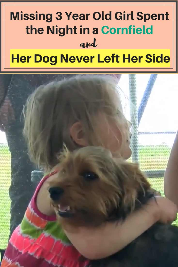 Yorkie Dog found protecting baby girl when she went missing in Missouri cornfields. The Yorkie barked and