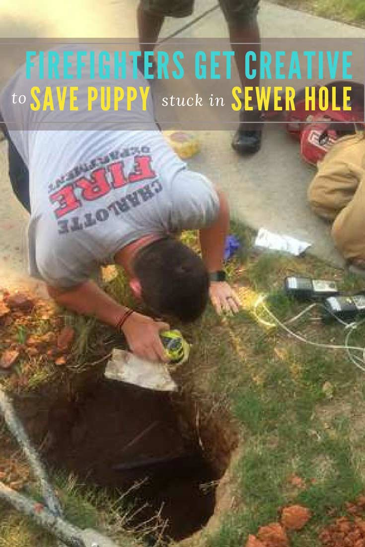 "Firefighters didn't know what to do when they found this lost puppy #dog in this deep sewer hole. ""We couldn't stick anything down there to try and retrieve the puppy because she kept moving."" #dogrescues #doglovers #dogs #animals"