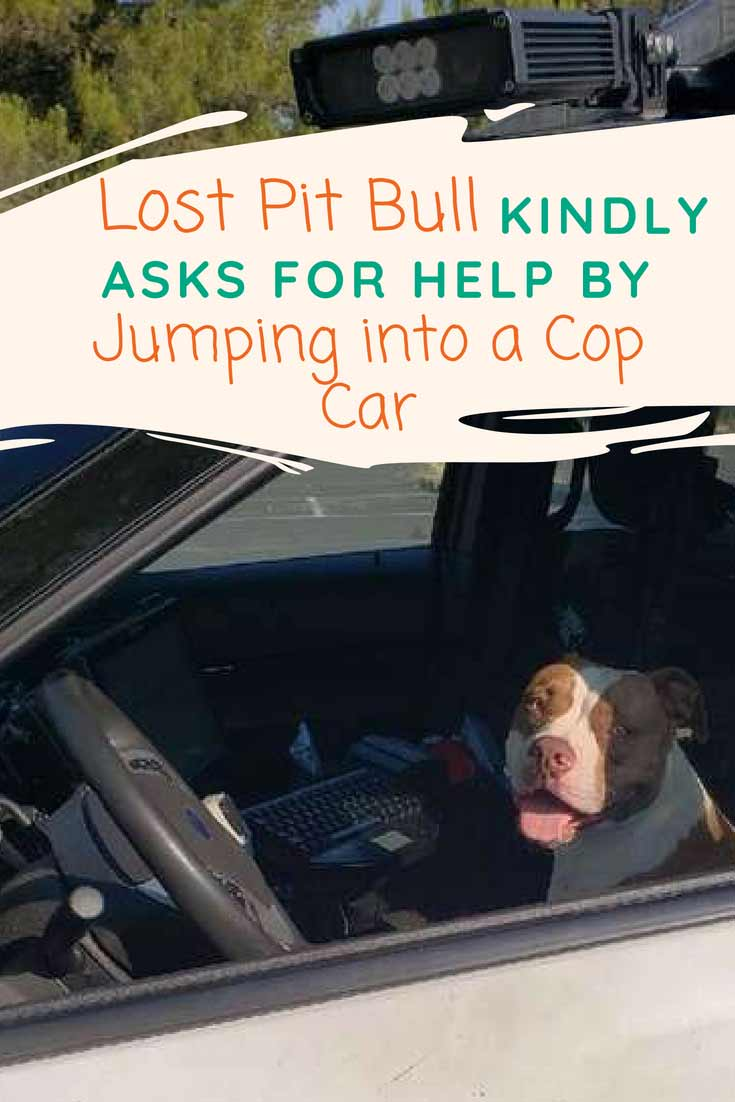 This pit bull knew just who to ask for help. This smart pit bull decided to take matters into her own hands when she was separated from her family in Walnut Creek, California.