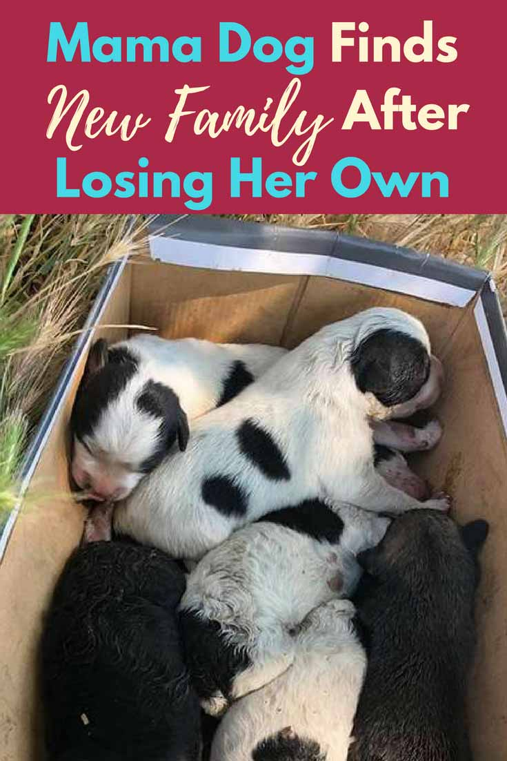 When the rescue team got a call about some abandoned puppies, they quickly scooped them up. But they were missing their mother and something had to be done. Luckily, this mama #Dog was the perfect candidate...#doglovers #cute #rescuedogs #dogrescues #dogs