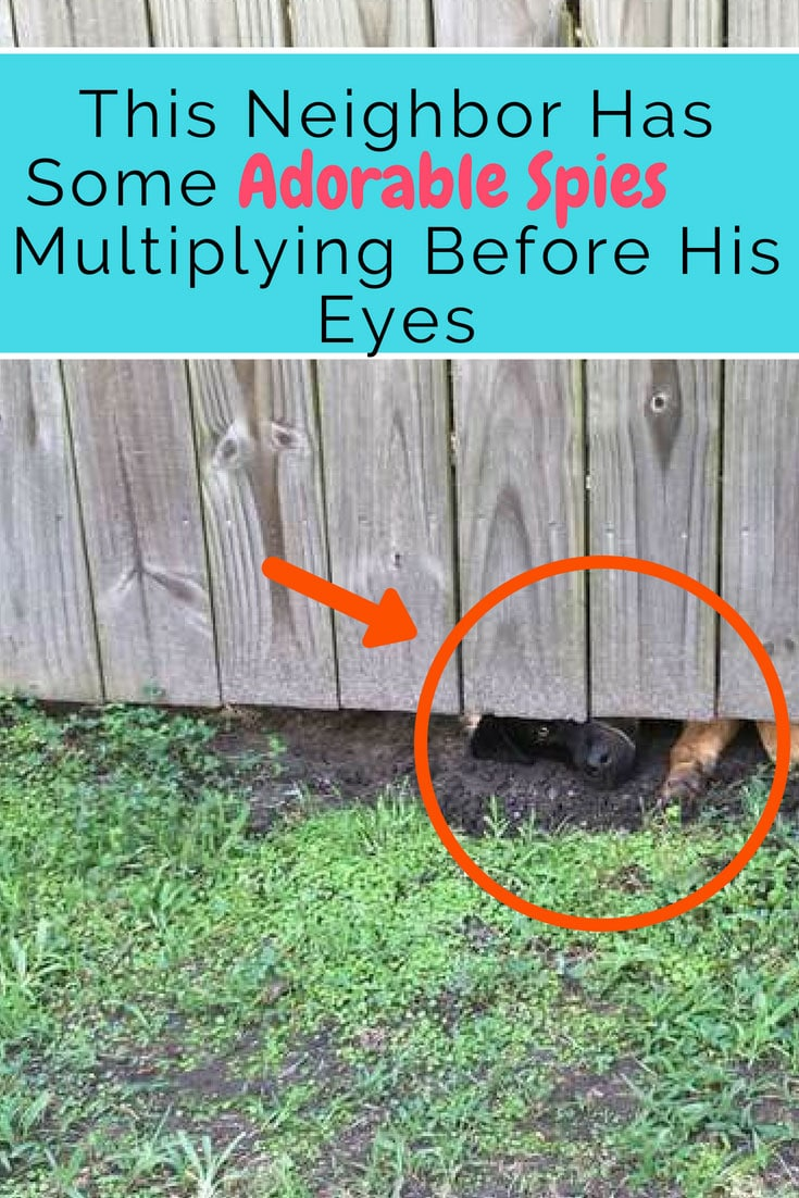 """These #dogs love secretly watching their new human neighbor and it's totally #adorable. """"It was pretty comical to watch. He was on a mission to get into my yard, but he just couldn't squeeze through."""" #doglovers #dog #cute"""