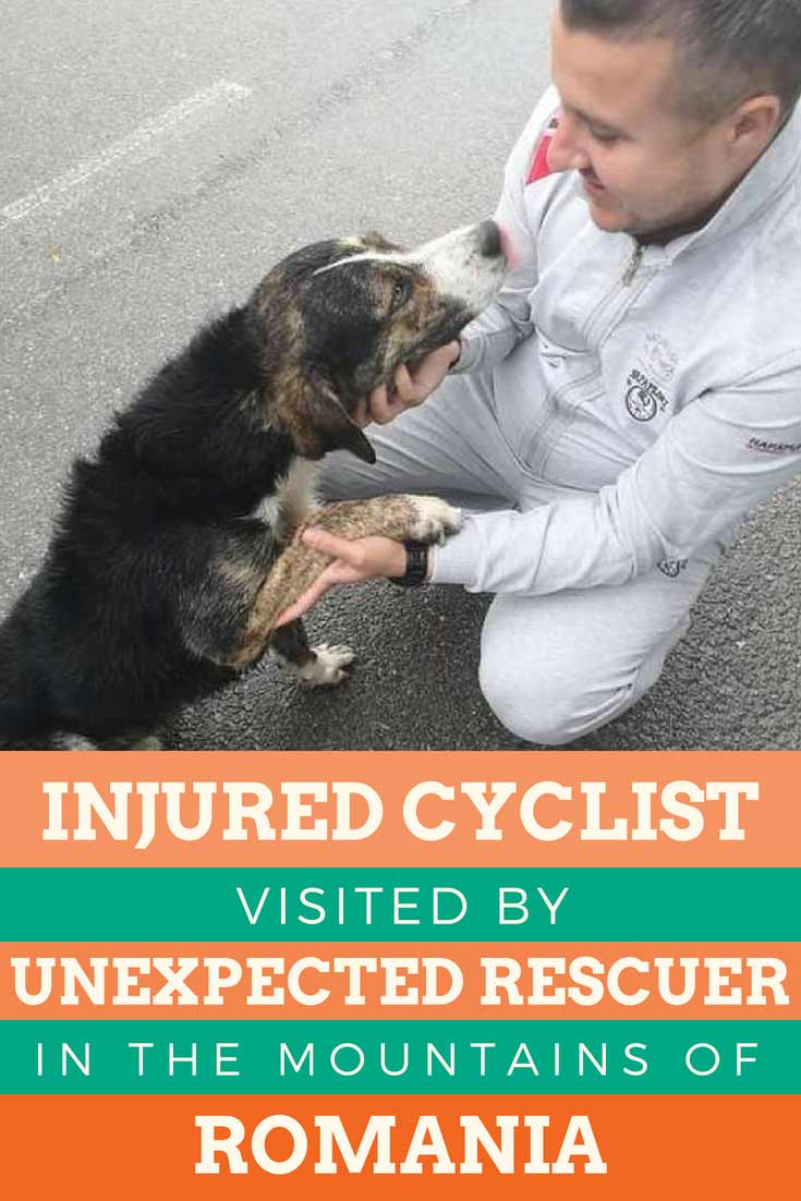 "Who rescued who? This dog came out of nowhere to save this cyclist injure in the mountains of Romania. ""When the cyclist fell and remained laying on the road, a dog came from the woods and laid beside the victim as to warm him with its body."