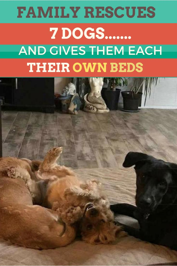 Dani Viverito and her husband have been rescuing dogs for years and they provide all SEVEN of their dogs with their own beds! Just look how happy these dogs are! #doglovers #dogs #dogrescue #animalrescue #adorable #cute