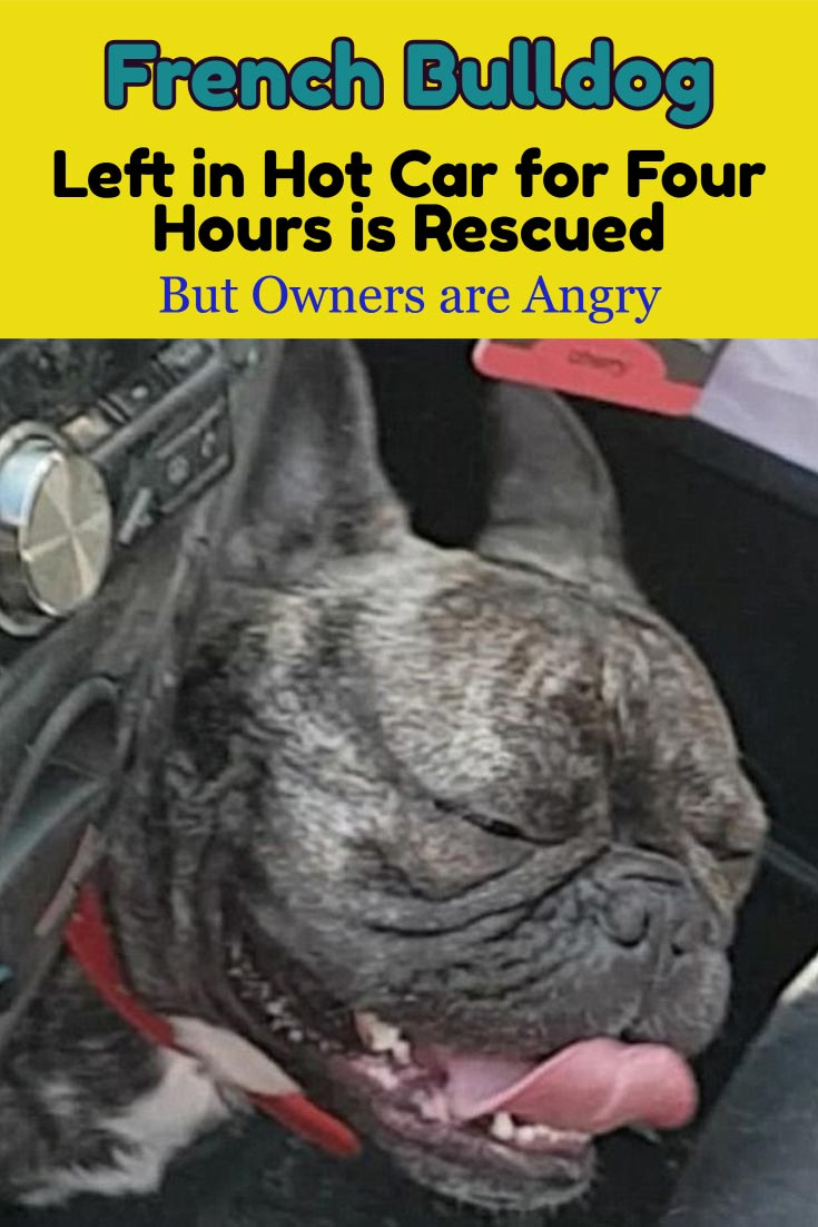 Beachside in England, temperatures had risen to well into the 90s. Beachgoers enjoyed themselves in the beautiful weather until they spotted a French Bulldog alone in a parked car. This #Dog was rescued from a hot car. A reminder that cars reach up and above 110-120 degrees F. #dogsafety #doglovers #dogs #dogrescues