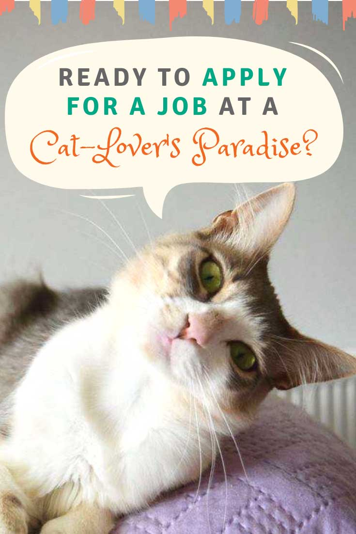 God's Little People Cat Rescue is looking for a new caretaker for their 55 rescue cats. Does this sound like your dream job? Well, pack up your things and get ready to move to the blissful Greek island, Syros.  #cats #catlovers #catlife #catlady