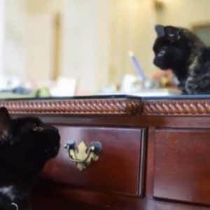Stray Kitten Rescued
