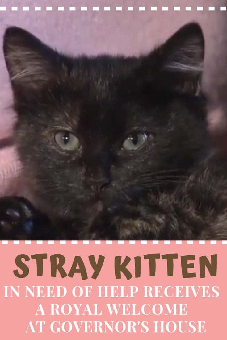 Governor Cooper and his family were so excited to see a stray kitten in the garage but at the same time they were concerned for its wellbeing. #catlovers #cats #kitten #catrescues
