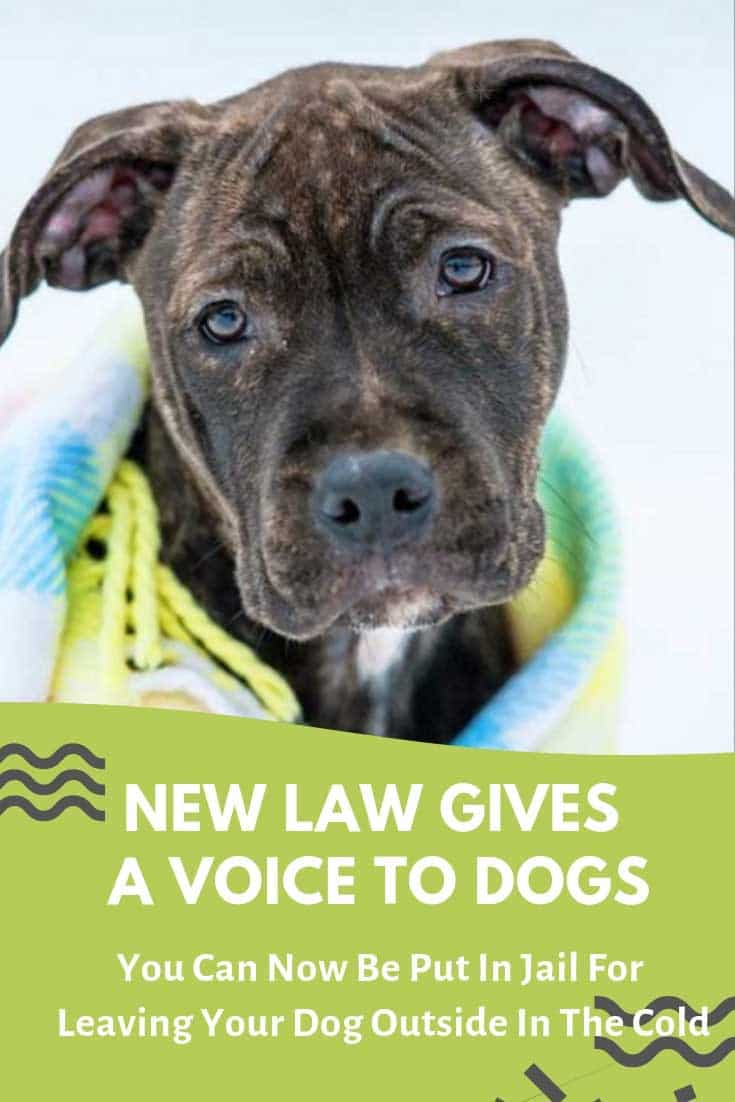 New law in Pennsylvania called Libre's Law gives a voice to dogs who get neglected, particularly when left outside in the cold. One of the main issues the law addresses is leaving a dog alone outside for over 30 minutes in temperatures below 32 degrees or above 90 degrees F. This is now being recognized as a CRIME in Pennsylvania, punishable by law with up to $750 in fines and 90 days in prison. #dogs #dogrescue #doglovers #animalrights #animals